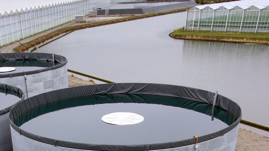 Chemische waterkwaliteit Delfland is voor 2e jaar op rij verbeterd